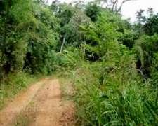 25.000 Has RN14 San Pedro. Campo Virgen de Monte Nativo