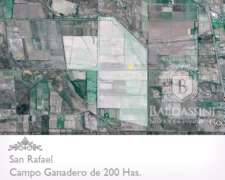 200 Has. Ganaderas En Salto De Las Rosas - San Rafael