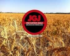 1050 Has 70% Agrícola (triguero) - la Plata, Buenos Aires