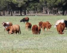 Pastaje, Capitalizacion, Vacas, Gordos