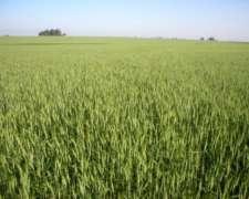Campo en Venta en Tres Arroyos 1500 Has. 90 % Agrícola