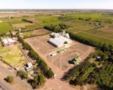 Mendoza - Planta Palmira 5.5 Has