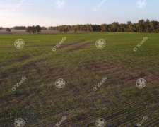 Campo en Venta Apto Agricola 300 Has General Belgrano
