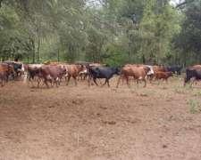 2500 Has Mixtas en Taco Pozo, Chaco