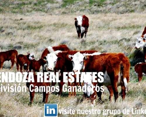 Campo 4190 Has en Gral Alvear- Mendoza