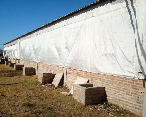 Cortinas Avicolas Calchaqui C 250