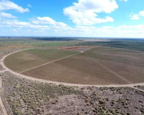Pcia. de Mendoza - las Catitas - la Nueva Oeste