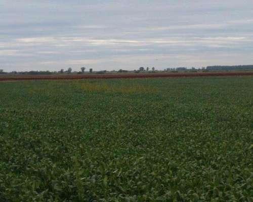 San Vicente 69 Has Agrícola. Campo en Venta