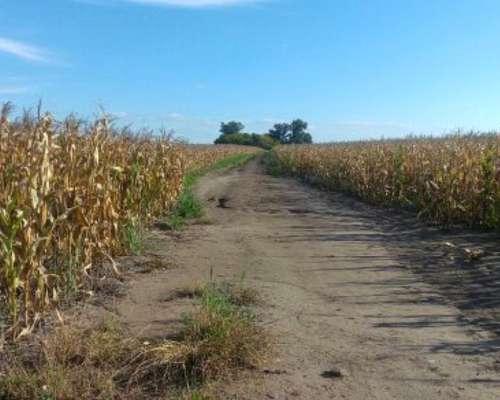 23 Has. Agrícolas en Azcuenaga San Andres de Giles