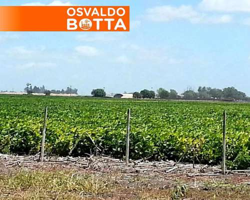 Urgente 2038 HS. Leones Córdoba Agrícolas U$S 5000/ha.