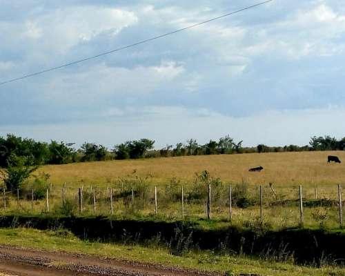 Importante Campo Mixto Frente Ruta 118 San Miguel Corrientes
