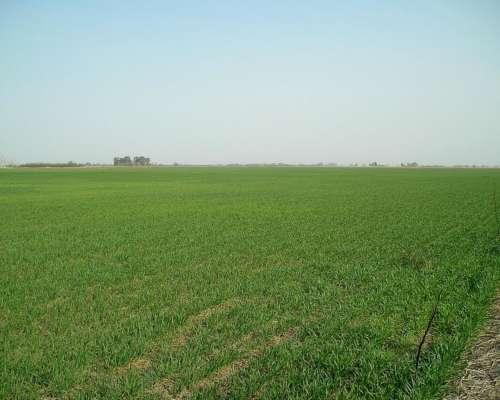 Vendo 120 Has Agricolas Excelentes en San Nicolas BS AS