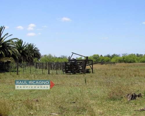 Campo en Venta en Chascomús.