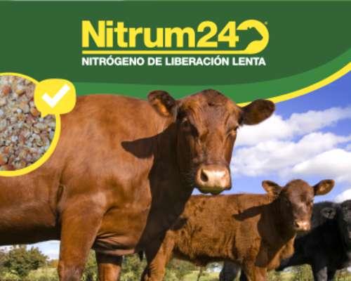 Nitrum24 Urea Protegida Suplemento Proteico