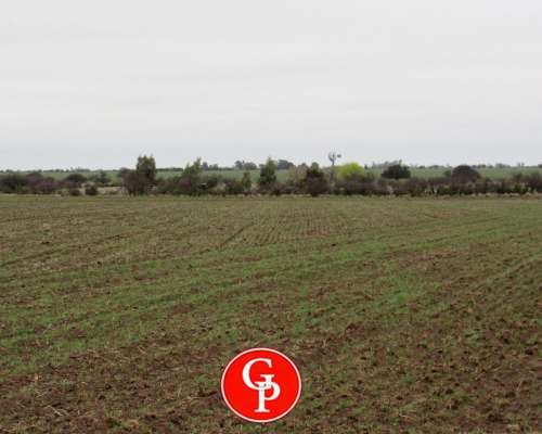En Venta, 750 Has. Bernasconi, la Pampa.-