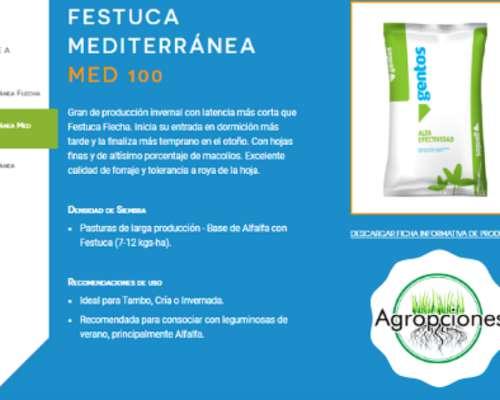Semilla de Festuca Mediterranea MED100 - Semillero Gentos