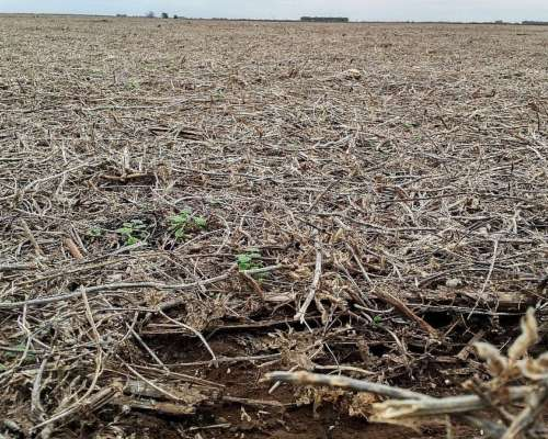 Se Alquilan 3800 H 100% Agricolas para 2019 Zona de Villegas