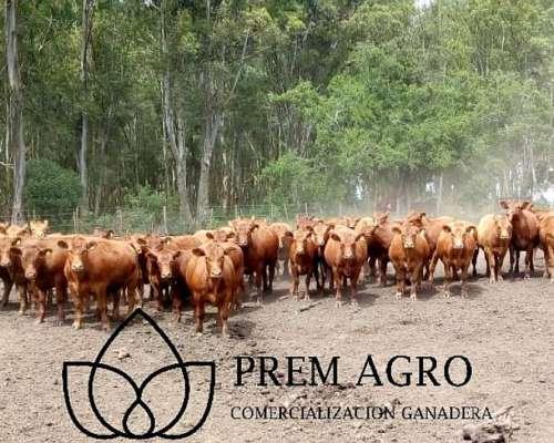 Prem Agro Consignataria de Hacienda