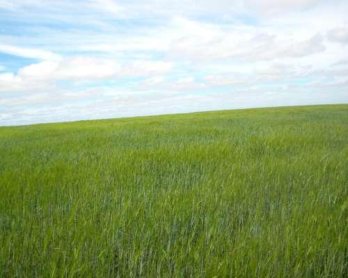 194ha Agricola en Rolon la Pampa