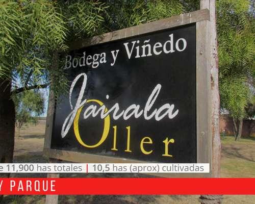 Emprendimiento Vitivinícola: Finca , Bodega y Champagnera