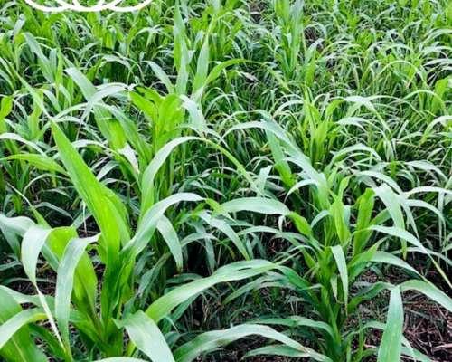 Prem Agro Agricultura - Ganaderia
