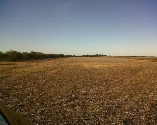 Excelente Campo de 200 Hectáreas Agrícolas Victoria E.r.