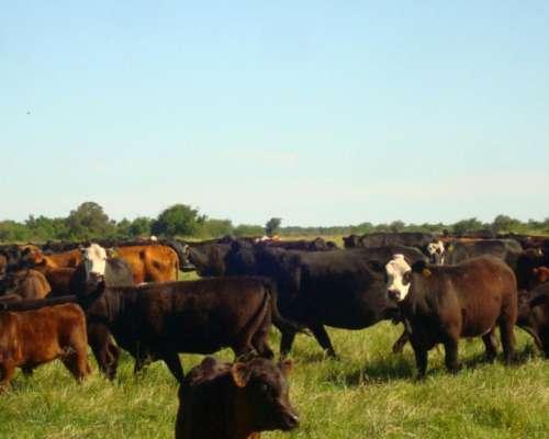 Venta de 170 Hectareas de Campo Agricola