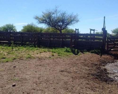 Bernasconi, Campo Mixto 200 Has. Agricultura y 540 de Monte.
