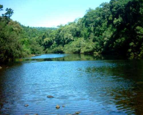 2.350 Ha Forestación Ganaderia y Turismo.