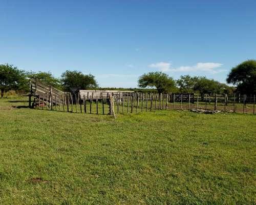 Campo Ganadero en Gualeguaychú-entre Ríos