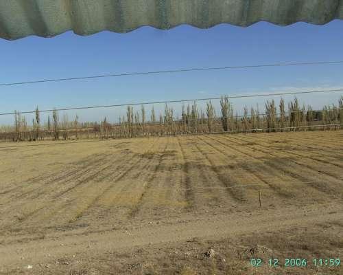 18 Has. Agricola Ganadero, Santa Rosa, Mendoza