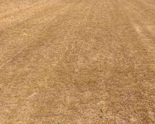 Vendo Buen Campo Agricola