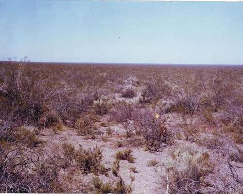 Venta 4977 HS. Puelen - 25 de Mayo - la Pampa - Ganadero