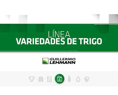 Variedades de Trigo - Línea