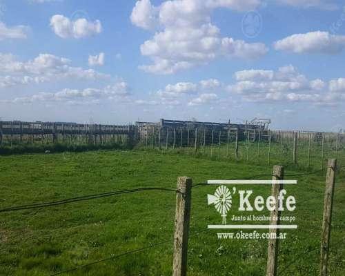 890 Has en Pila - Campo para 600 Vacas Madres