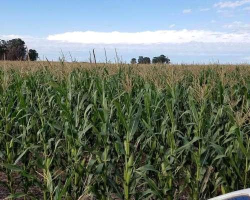 Vendo en Oeste de BS AS 550 H Agricol Sobre Ruta Excelentes