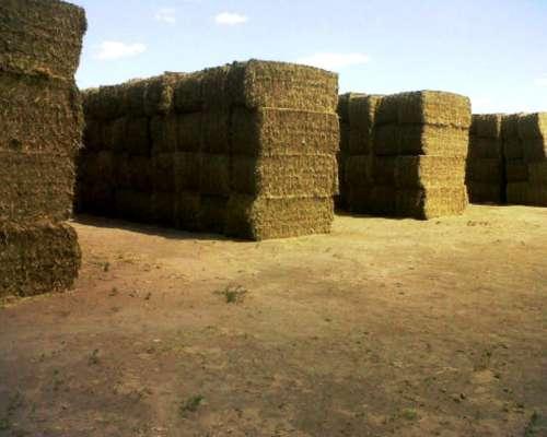 Megafardos de Alfalfa, Dueño Directo