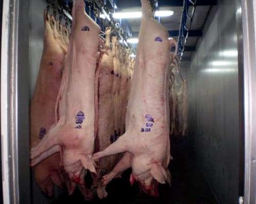 Frigorifico de Cerdos, Ciclo Completo, Chacinados y Criadero