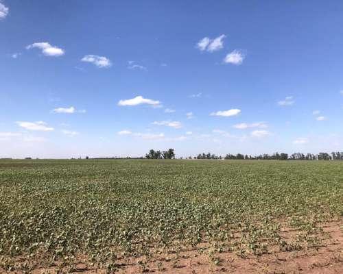 Junin 800 Has Agricolas Sobre Ruta
