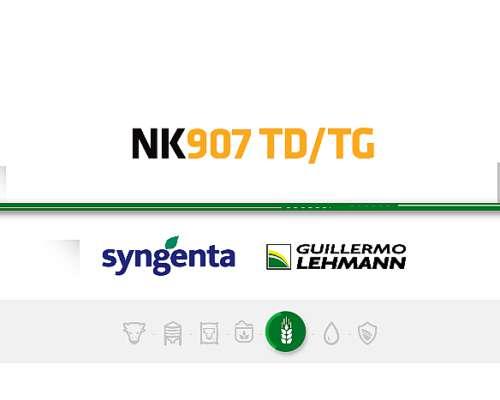 Nk 907 TD TG - Híbrido de Maízl Syngenta - Semillas