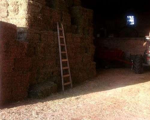 Canje de Fardos/rollos de Alfalfa