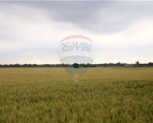 Gran Campo Agrícola - Ganadero en Emilia