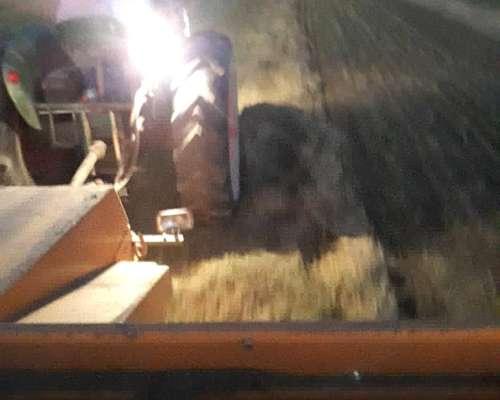 Fardos de Alfalfa Pura