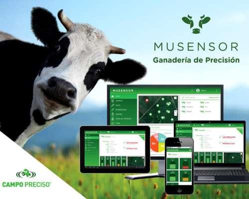 Musensor Ganadería de Precisión Monitoreo Online del Animal