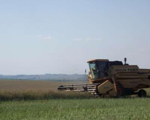 Vta. de 4.248 Has. Agrícolas en Cascavel - Parana - Brasil