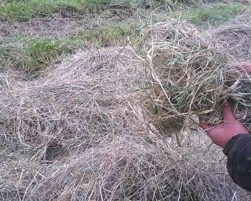 Rollos Grandes de Pasturas Recien Hechos