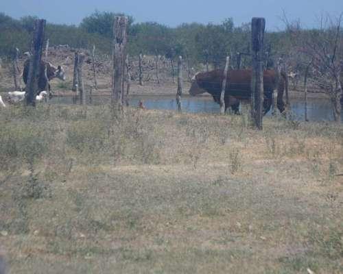 Campo en San Luis, Vendo o Permuto.