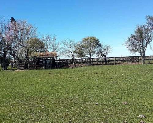 Muy Buen Campo Ganadero y Forestal