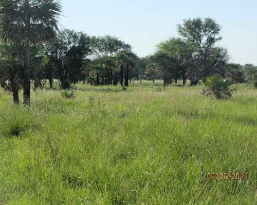 Pampa Almirón 2.500 HA- Chaco