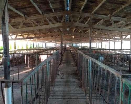 Criadero de Cerdos en Alquiler Provincia de Buenos Aires